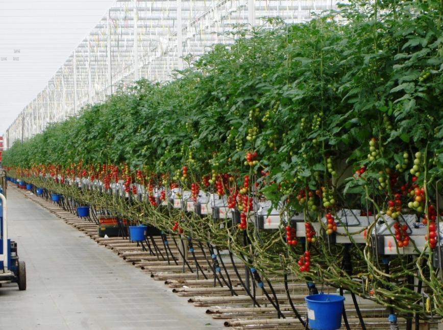 Impianto a goccia per orto stunning luimpianto di for Irrigazione a goccia per pomodori