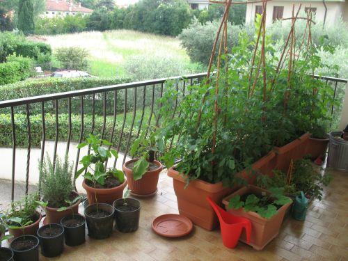 Come coltivare frutta verdura e aromi freschi nello for Coltivare sul balcone