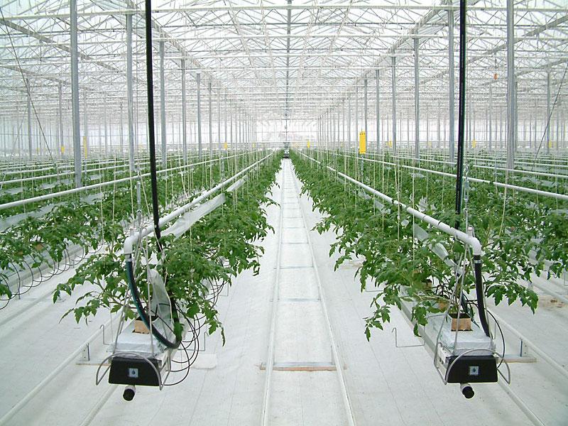 Summer School Greenhouse Horticulture Formazione